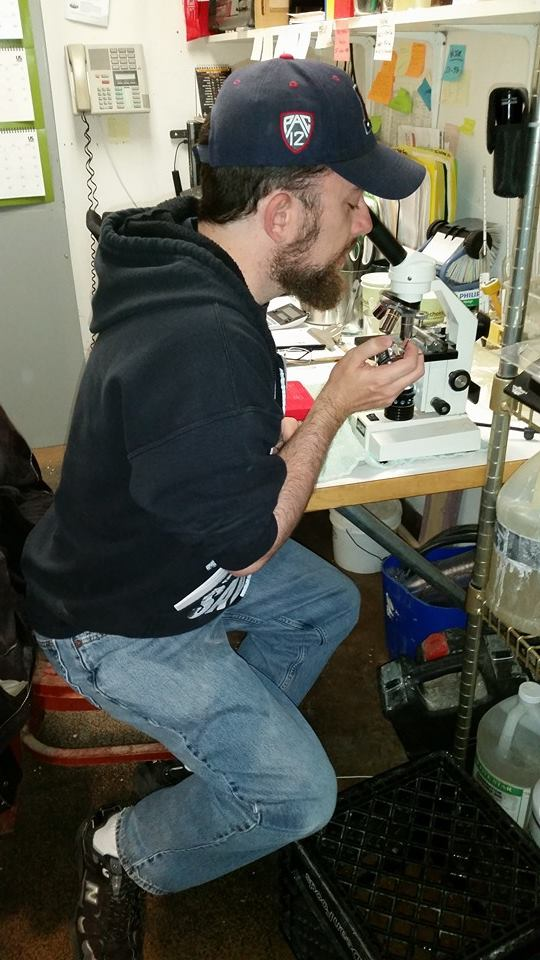 Don't forget to count the yeast! Stoutmeister uses a microscope for the first time since high school.