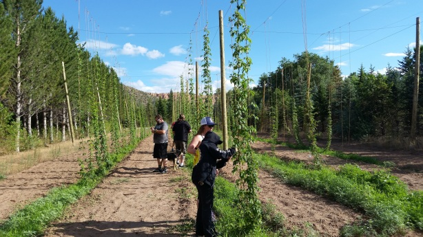 Grow you beautiful hops, grow!